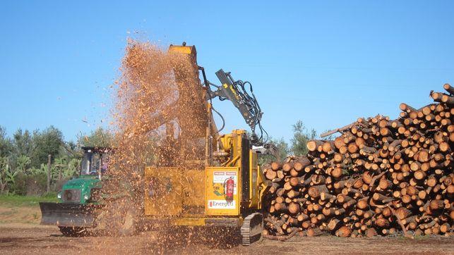 En Extremadura se estima que sólo se aprovecha el 3% de la biomasa para combustible