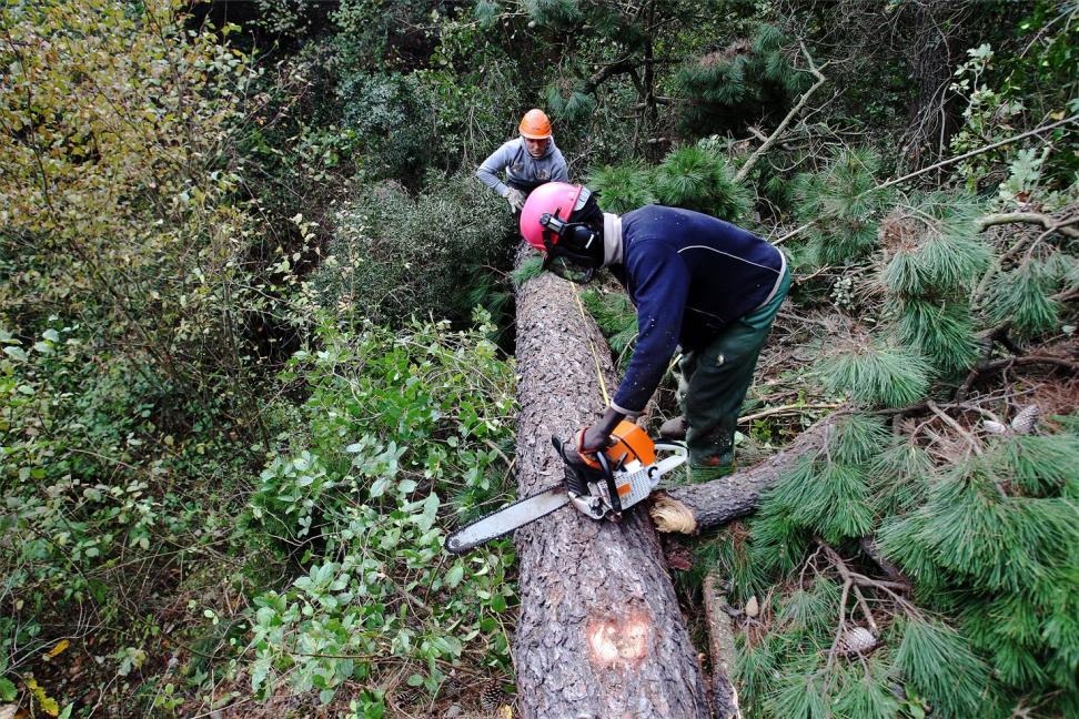 Sube el empleo en el sector de la Biomasa