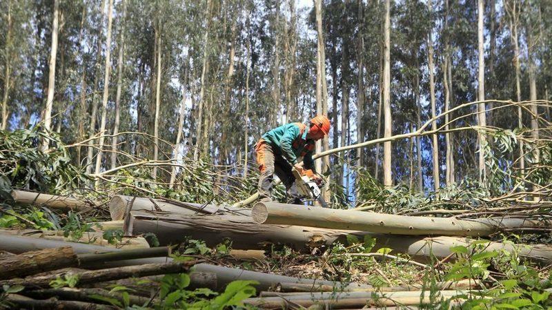 La Xunta de Galicia ha impulsado la instalación de más de 4.000 calderas de biomasa durante los cuatro últimos años.